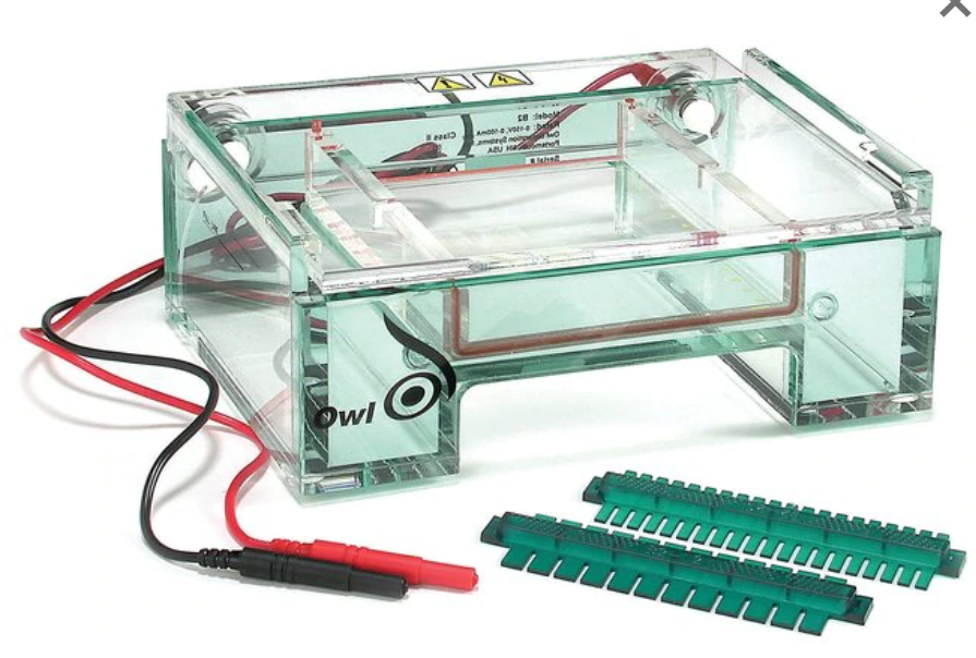 Owl EasyCast B2 Mini-Gel System with Combs by Thermo Fisher Scientific